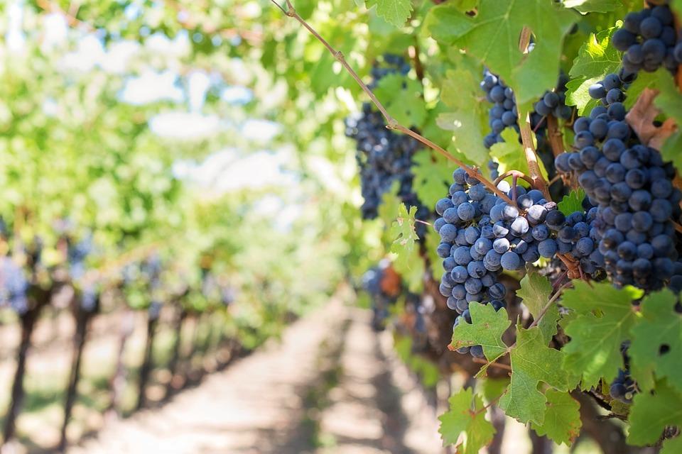 Море, горы и вино. Сколько стоит жить в Тоскане